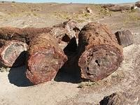 petrifiedforest903